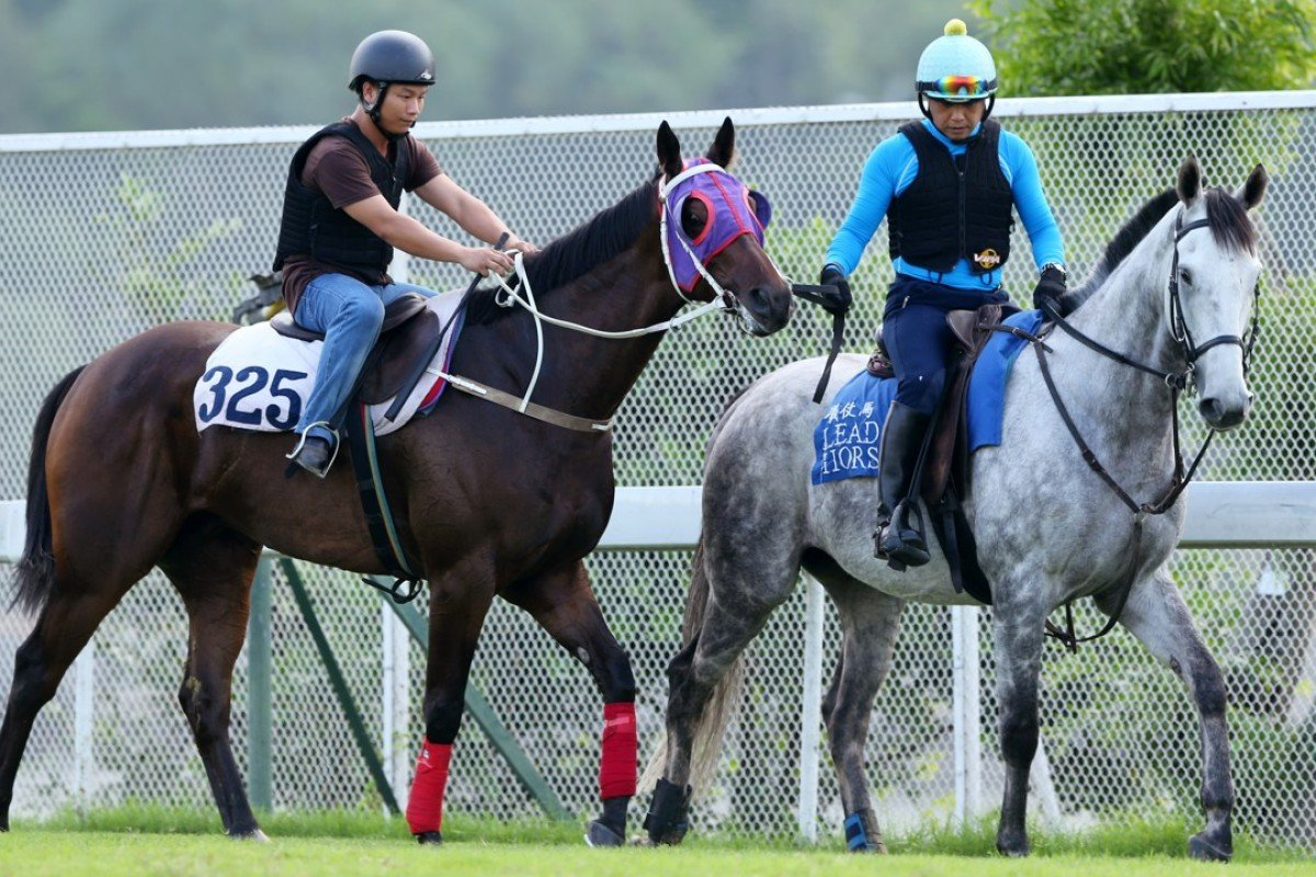 Trackwork riders try to get Pakistan Star running. Photos: Kenneth Chan