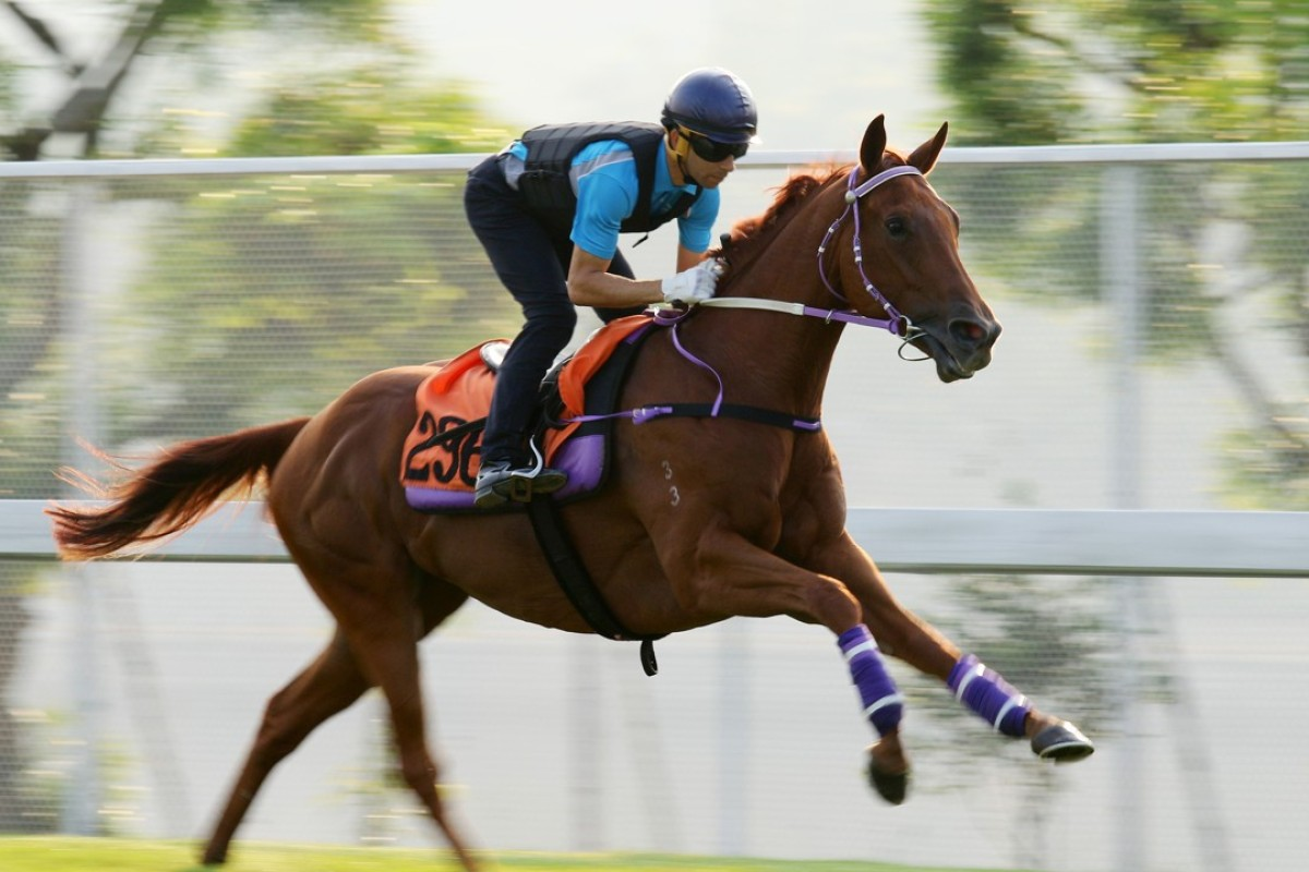 Joao Moreira rides Master Albert in a track gallop in September. Photos: Kenneth Chan.