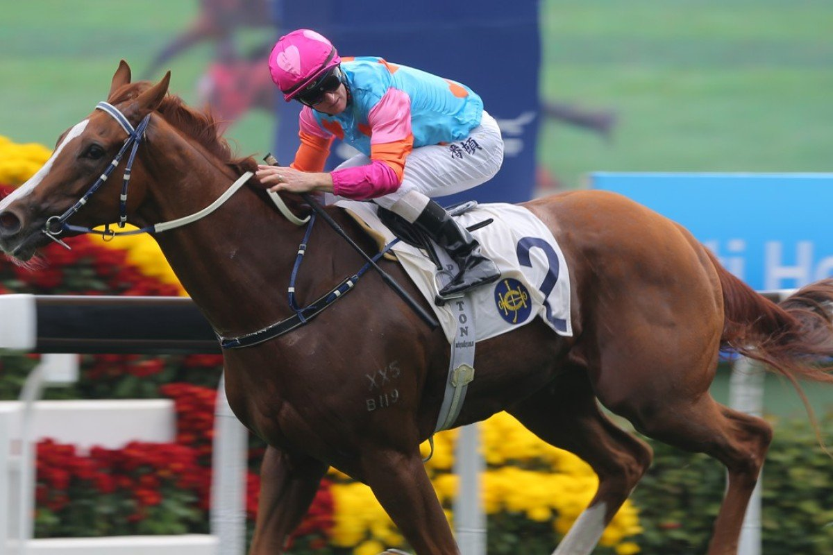 Zac Purton looks over his shoulder as Handsome Bo Bo cruises to victory on Sunday. Photo: Kenneth Chan