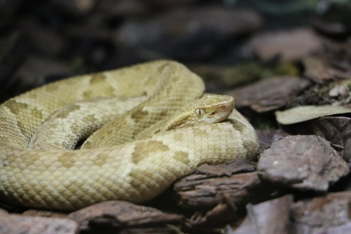 Aggressive, poisonous vipers are not what most people want to encounter when exploring an otherwise uninhabited island.
