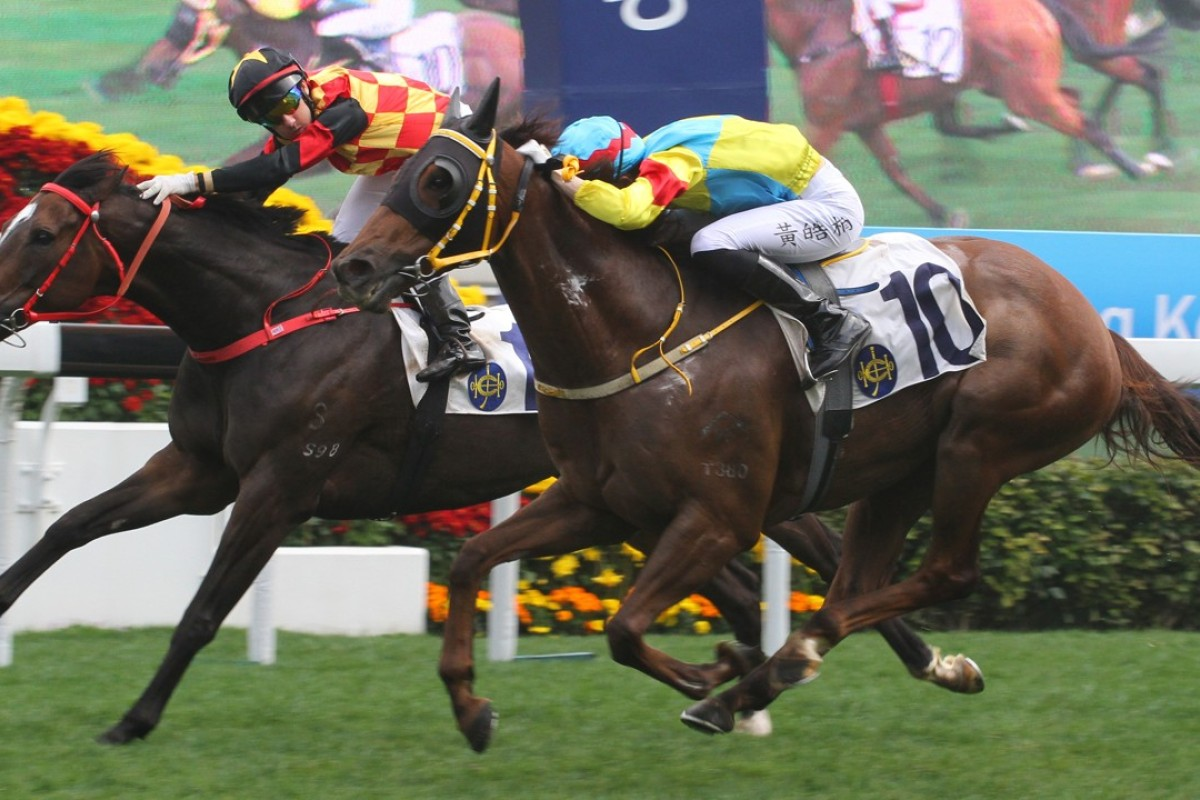 Royale Elegance (left) gets pipped by Great Treasure at Sha Tin last start. Photos: Kenneth Chan