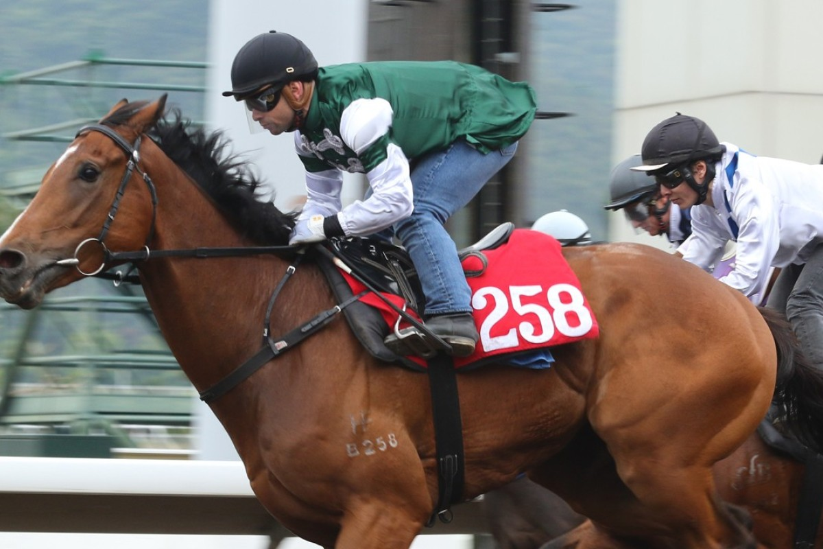 Emerald Spur trials at Sha Tin in March. Photo: Kenneth Chan
