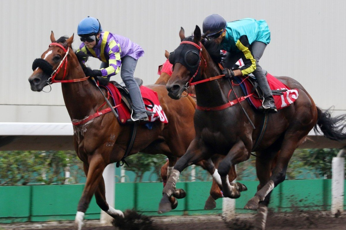 Hezthewonforus (Keith Yeung Ming-lun) and Raging Storm (Joao Moreira) trial side-by-side at Sha Tin on April 15. Photos: Kenneth Chan.