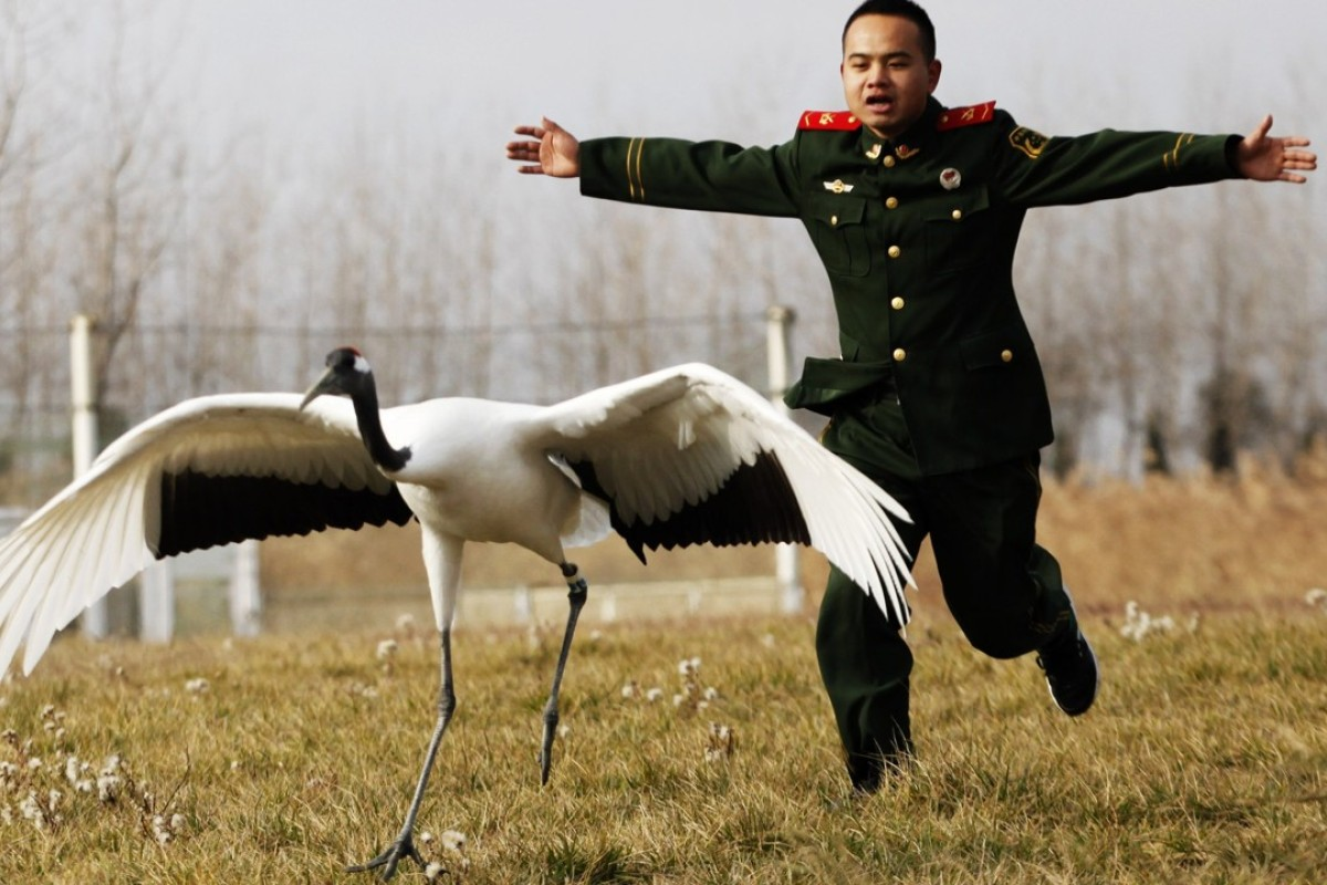 A Chinese soldier with a red-crowned crane in Yancheng, Jiangsu province. Photo: Xinhua