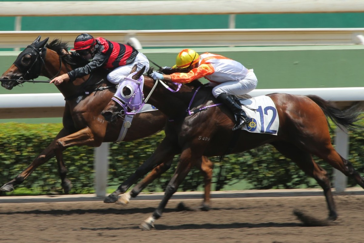 Sky Treasure (Zac Purton) holds off Snowhooves (Joao Moreira) in a dirt race at Sha Tin on June 16. Photos: Kenneth Chan.