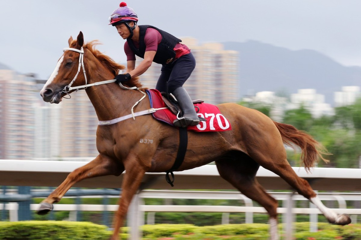 Pakistan Friend works at Sha Tin this week. Photos: Kenneth Chan.