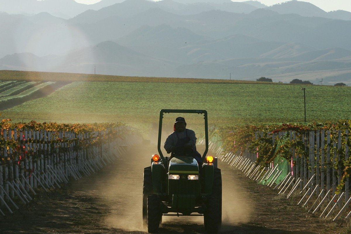 A California vineyard, which could be seriously affected if the trade war between the US and China deepens. Photo: AFP