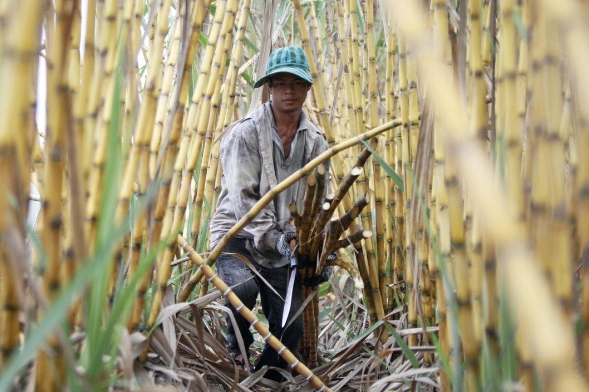 A sugar farmer in Kandal province, Cambodia. Photo: Reuters