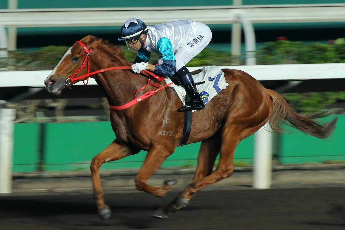 Joao Moreira guides Gunnison to victory at Sha Tin on Wednesday night. Photos: Kenneth Chan