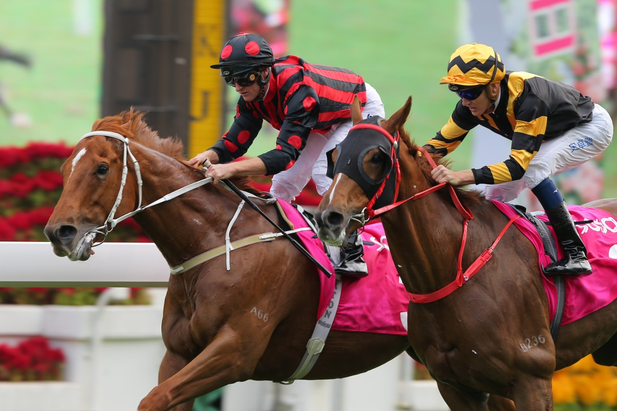 Time Warp beats Glorious Forever in the Sa Sa Ladies' Purse in November. Photo: Kenneth Chan