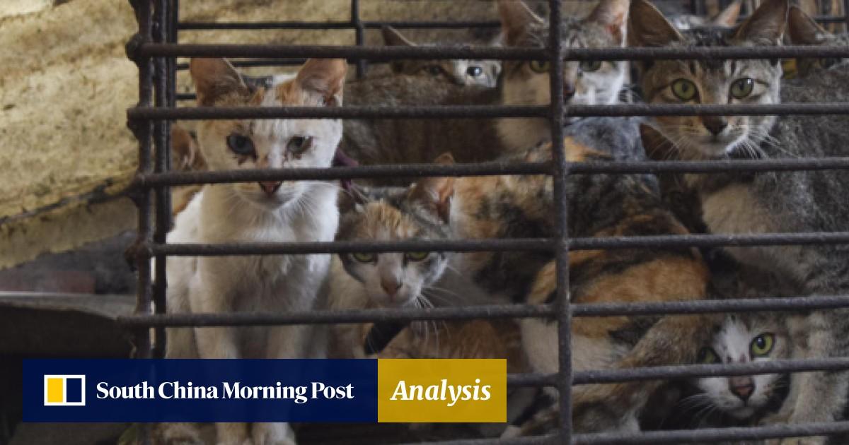 Cruel trade: the flourishing cat-meat restaurants of north