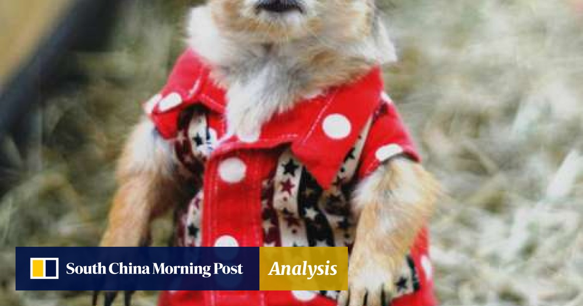 05d7c28868709 Batman suits and cowboy outfits: a prairie dog's life in Thailand | South  China Morning Post