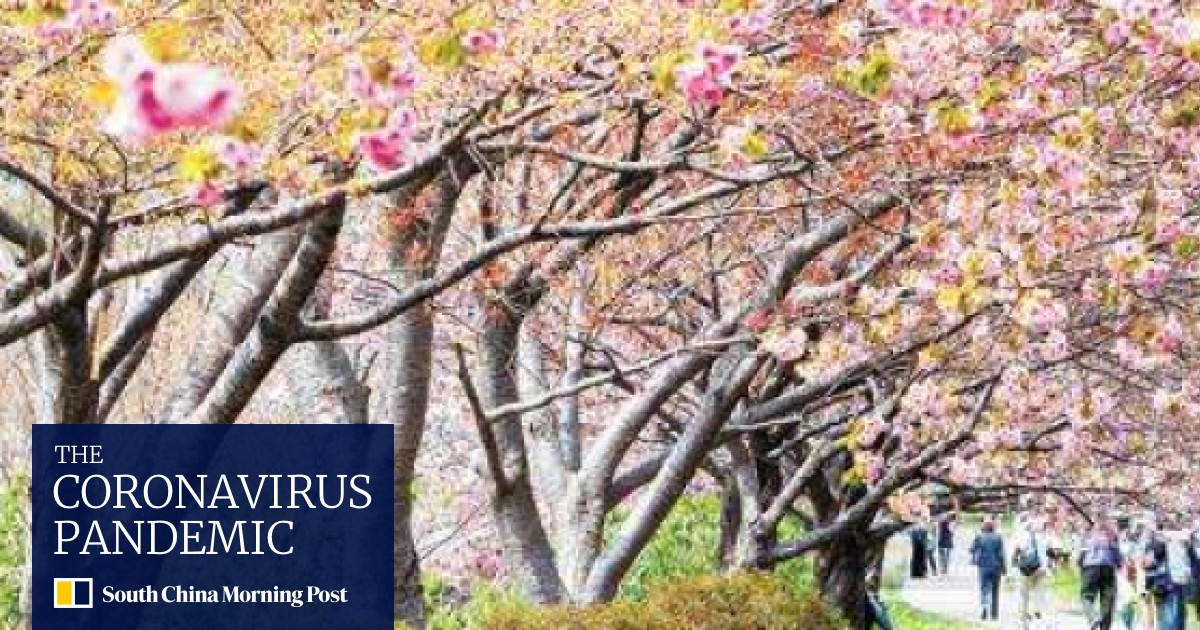 The Good The Bad And The Ugly Sides To Japan S Cherry Blossom Season South China Morning Post