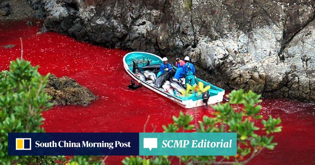 Japan slaughters first dolphins in widely-condemned annual