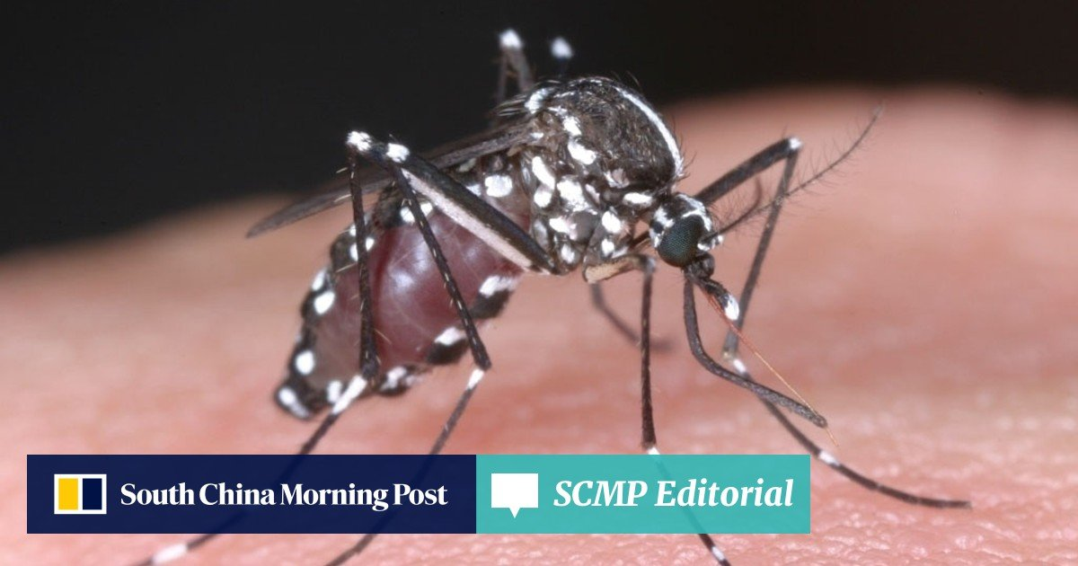 Dengue fever threat overshadows summer | South China Morning