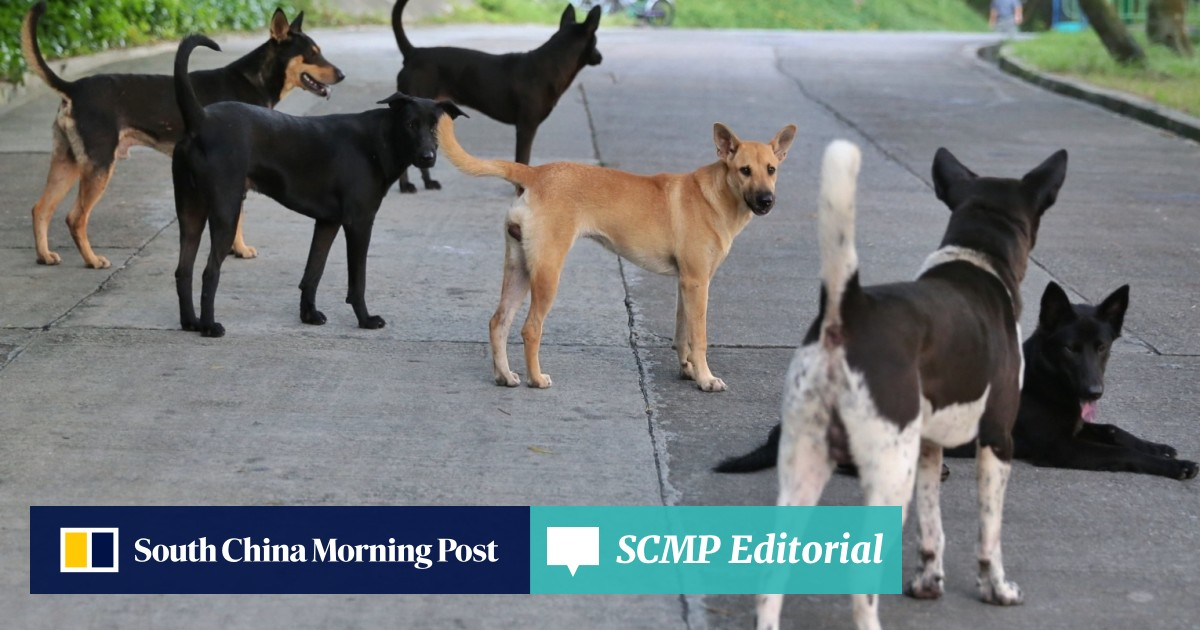 A sad end: more than half of stray dogs caught in Hong Kong