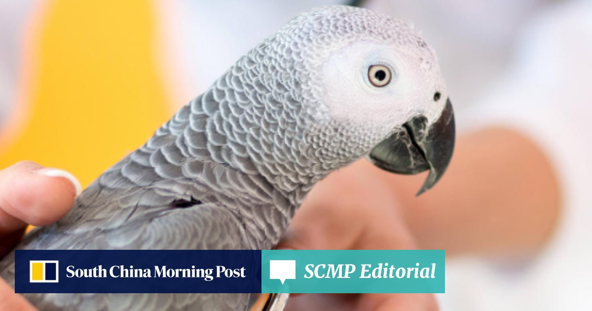 Why a bird is the ideal pet for Hong Kong's small homes