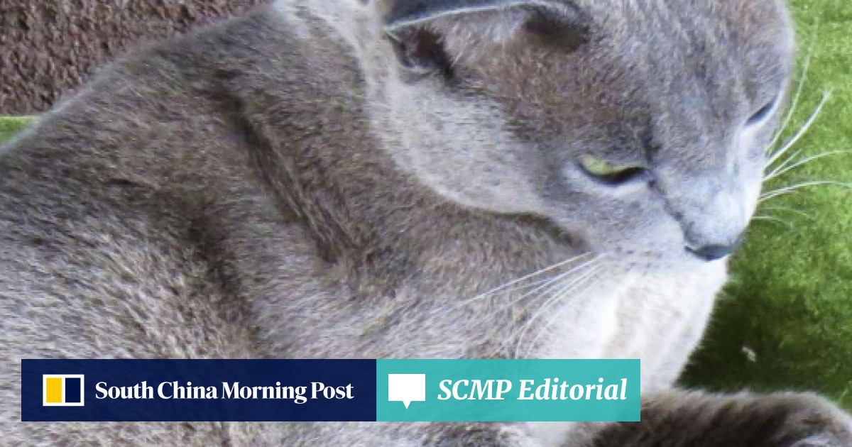 Hong Kong explorer returns Burmese cats to Myanmar after a 70-year