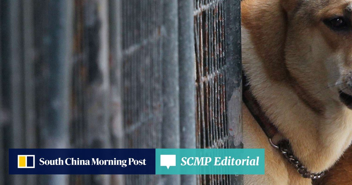 No more puppy mills: Tighter animal welfare laws will clamp