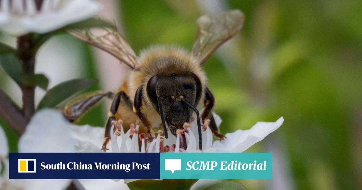 Honey wars: what's killing New Zealand's manuka bees