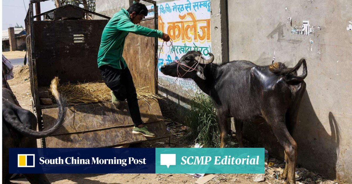 Why the world needs to sit up and take notice of India's war on meat