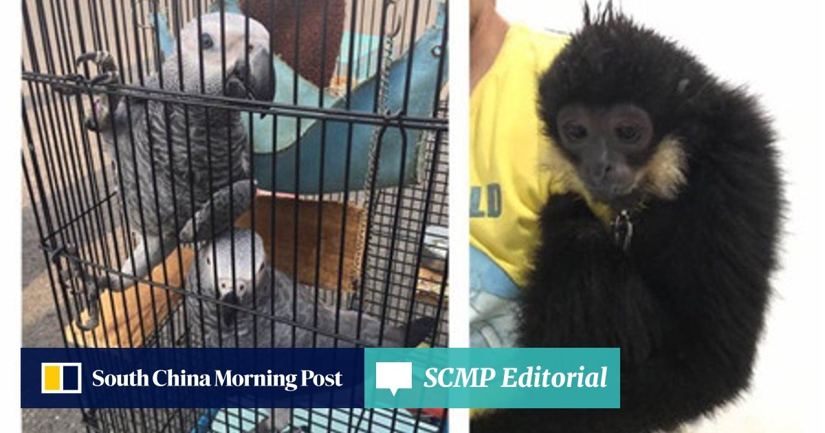 It was like a mini wildlife park': Chinese police bust