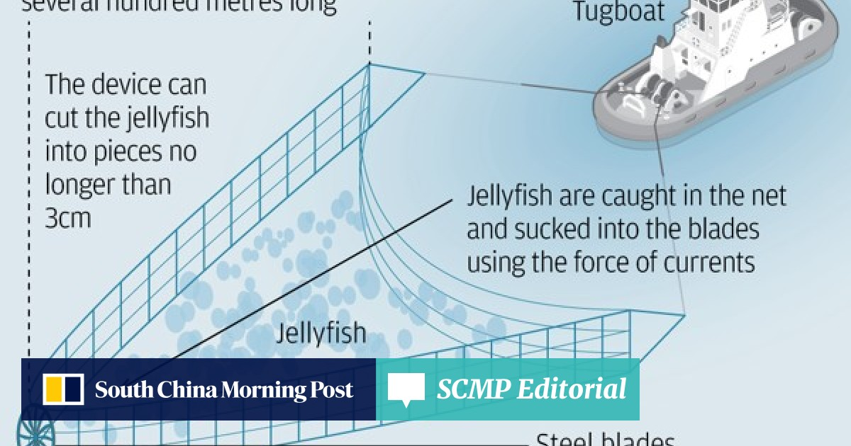 Why the humble jellyfish could stop China's aircraft carriers in