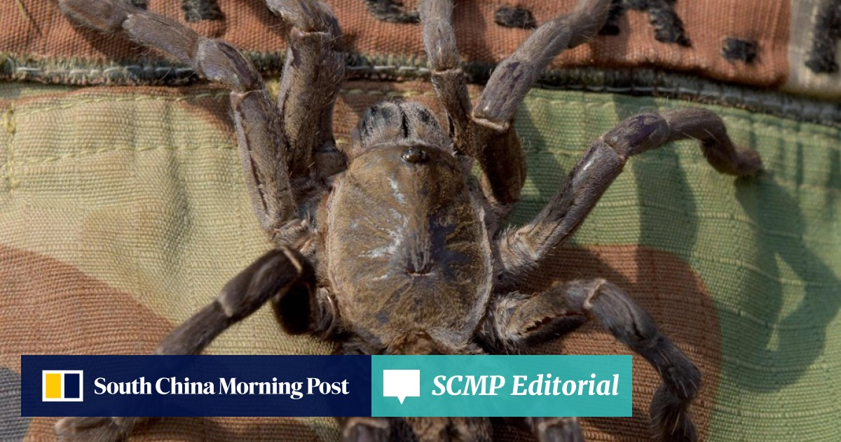 In Cambodia, tarantulas may not be on the menu for much longer due