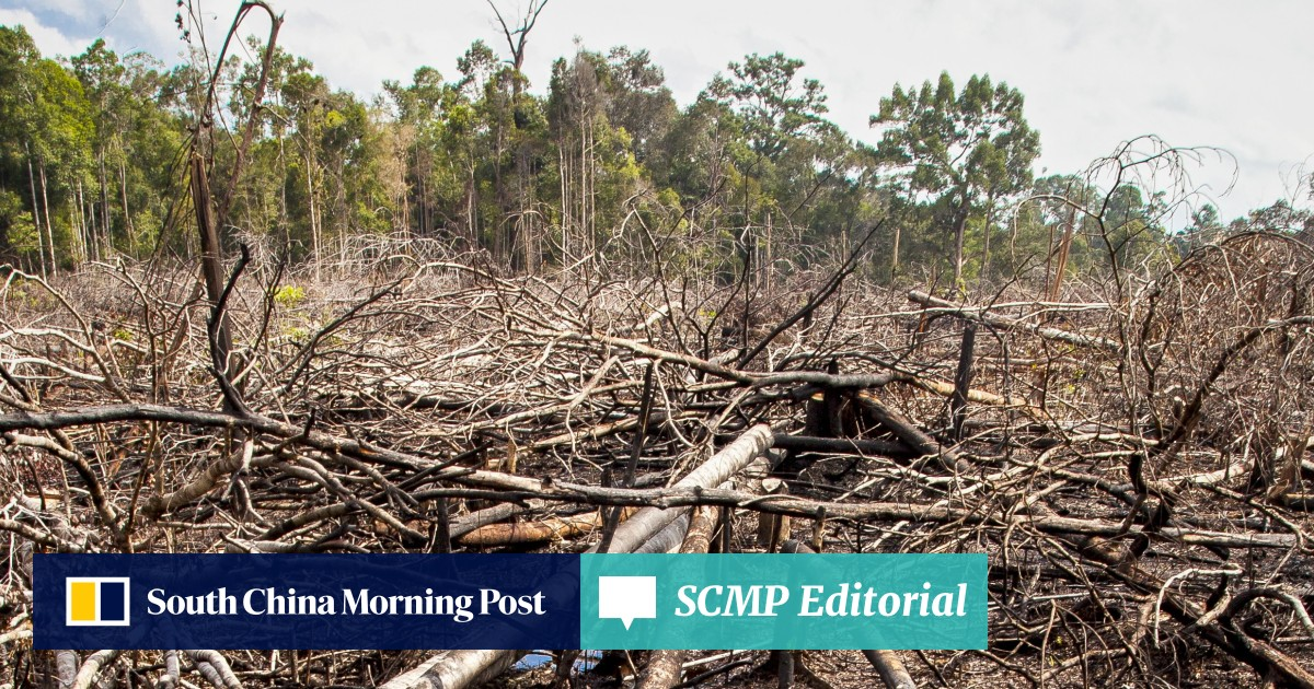 How the Tokyo 2020 Games are killing rainforests in Malaysia