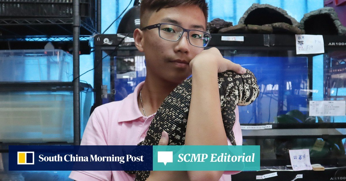 Why are more Hongkongers going wild for exotic pets? | South