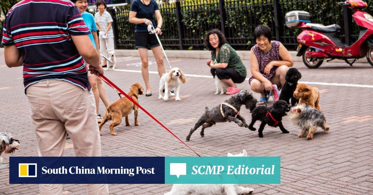 It's war on man's best friend: a spate of dog poisonings hit China