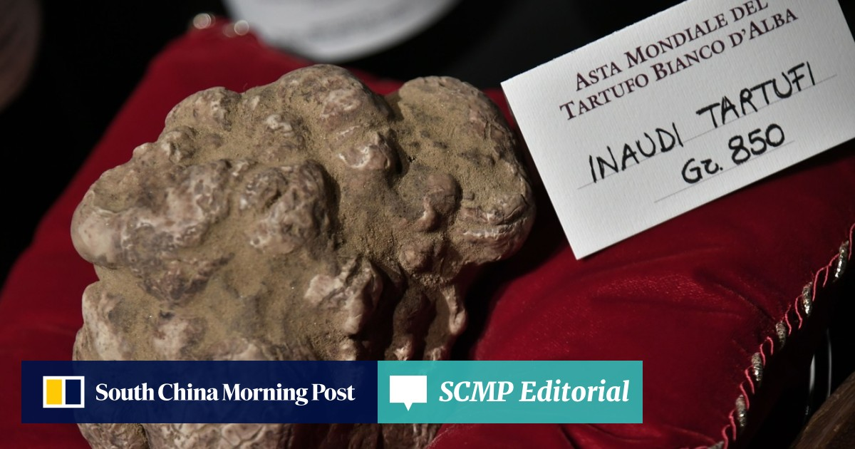 Hong Kong buyer snaps up 'exceptional' white truffle nugget for US