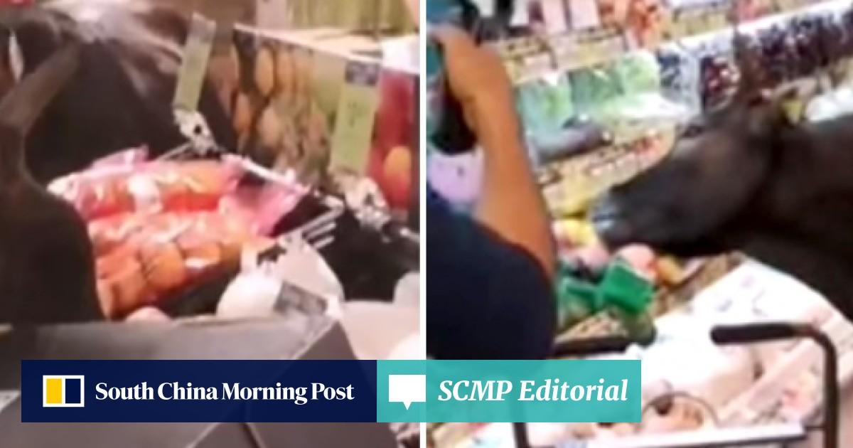 Cows go foraging in Lantau Island supermarket, which Hong Kong