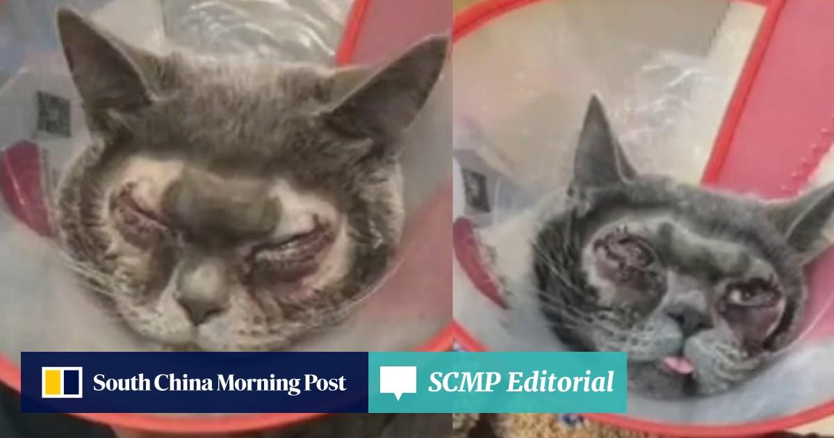 Media madness: Chinese vet decries 'nonsense' story of cat's
