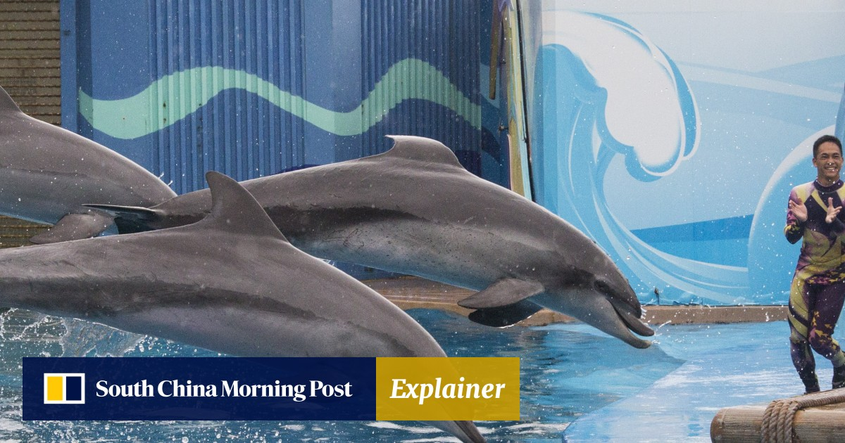 Hong Kong S Ocean Park Dated And Fake Or A Conservation Champion South China Morning Post