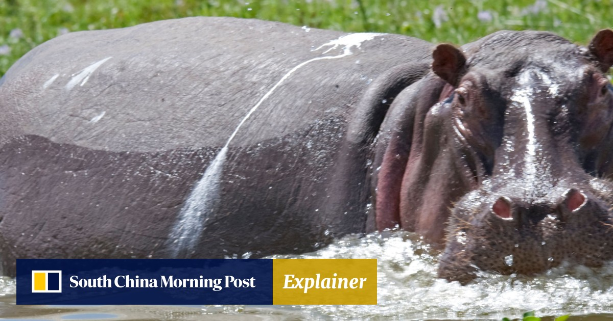 Chinese tourist killed in hippo attack in Kenya | South China
