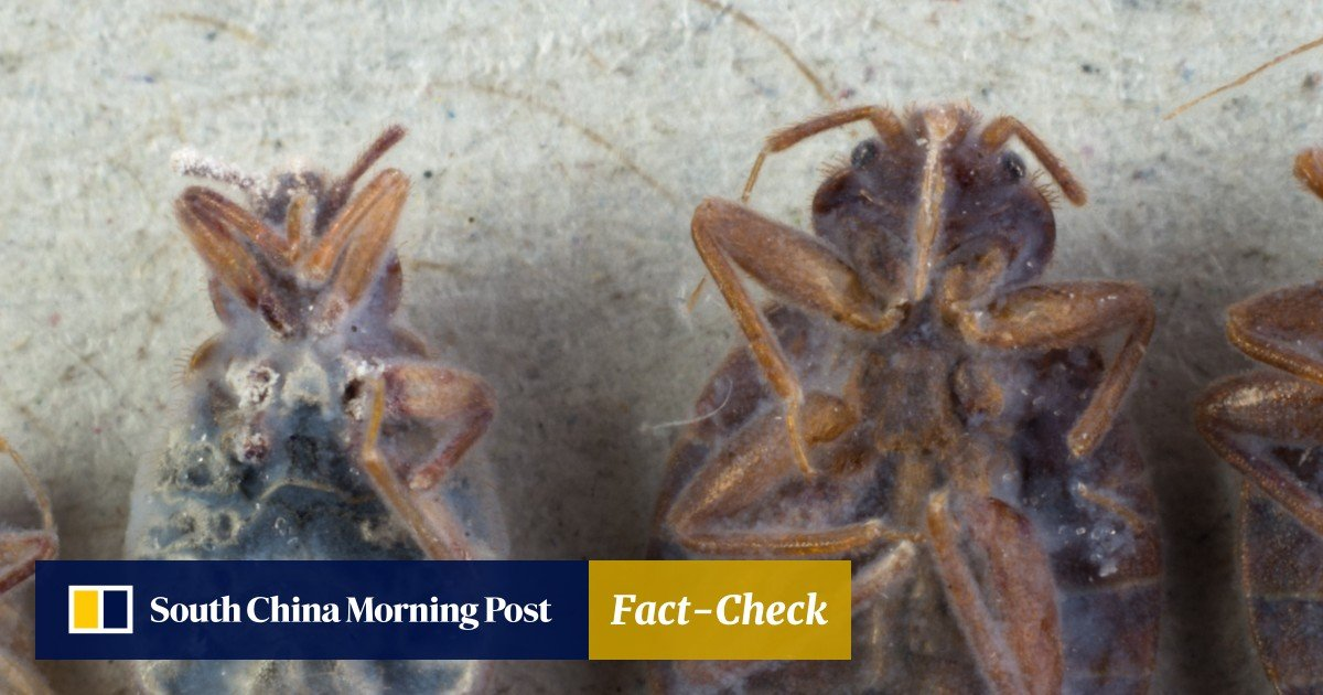 Is Hong Kong on the verge of a major bed bug epidemic? We talk to