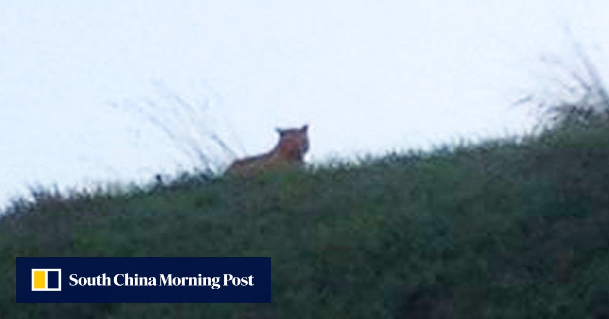 Mystery big cat on the prowl near Paris is not a tiger