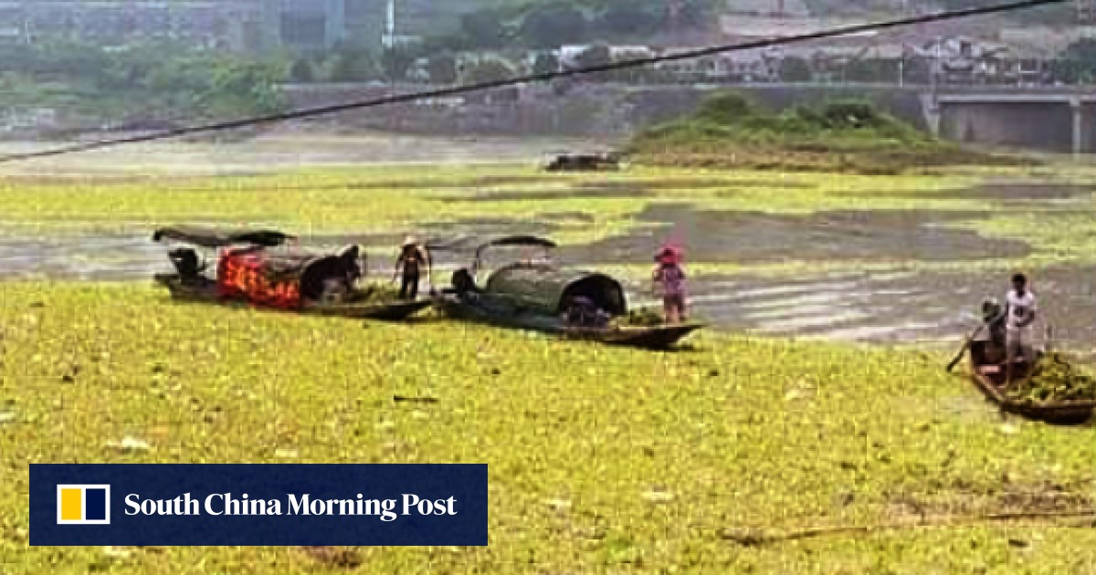 Clean-up ordered after China's Yangtze turns into a river of