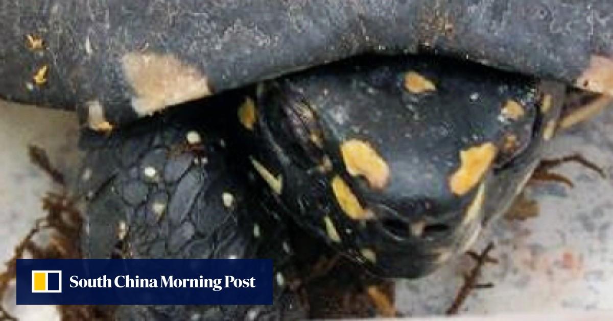 23 Smuggled Live Turtles Found Inside Air Parcels At Hong