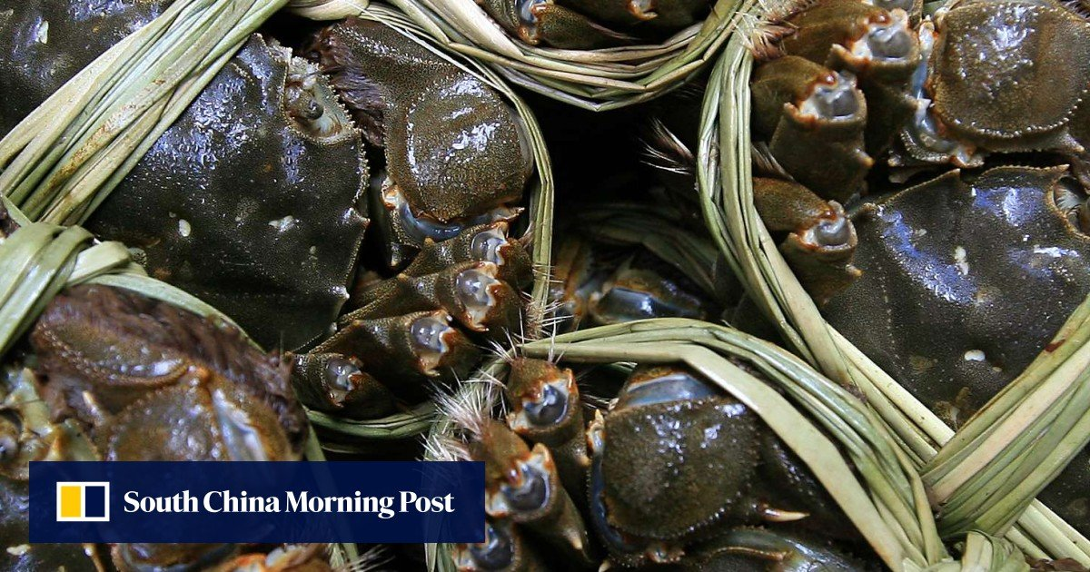 Cancer-linked chemicals found in Hong Kong hairy crab