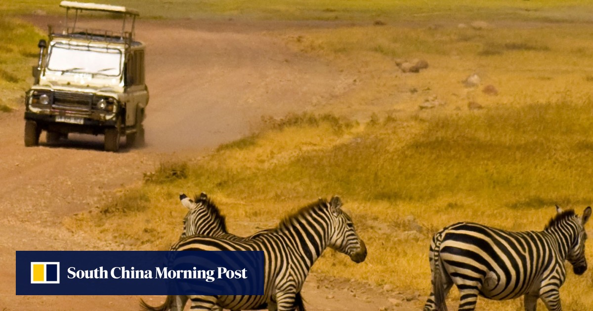 The good, bad and ugly sides to African safaris | South