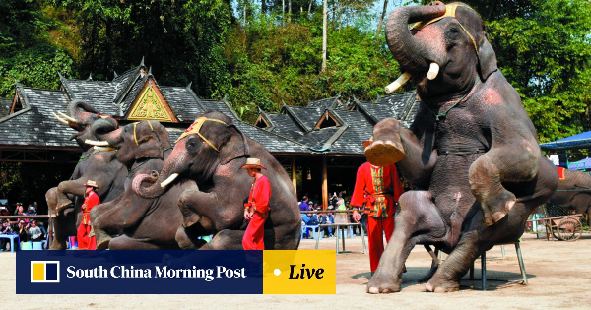 24f1e32a8 How did Prince William end up promoting a cruel China elephant ...