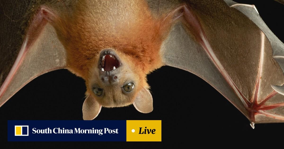 Bat перевод на русский [PUNIQRANDLINE-(au-dating-names.txt) 65