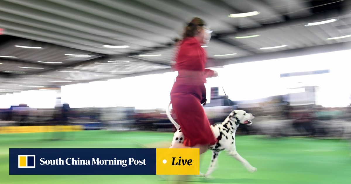 Big and beautiful or short and cropped? Dog owners at Westminster