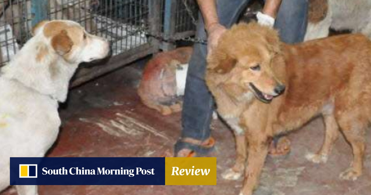 Cruelty against stray animals on the rise in India amid lack