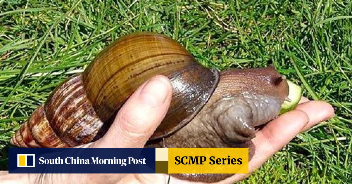 Crush snail Candid Crushes