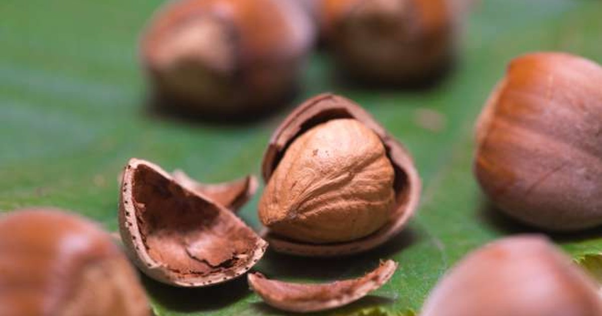 The 10 best nuts to eat, why they're so good for you, and