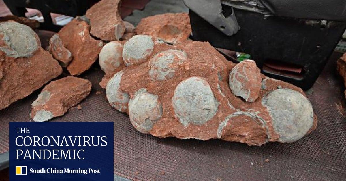 Dinosaur eggs real real dinosaur