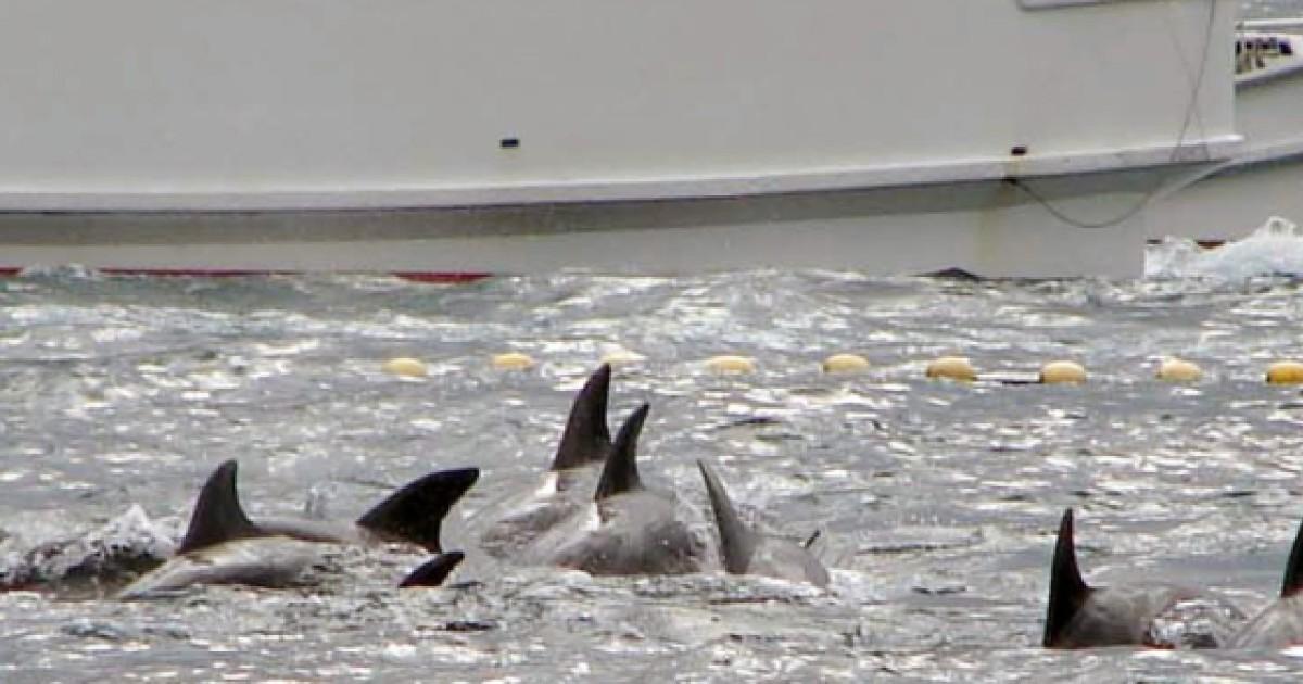 The Cove' dolphin hunters break silence over documentary
